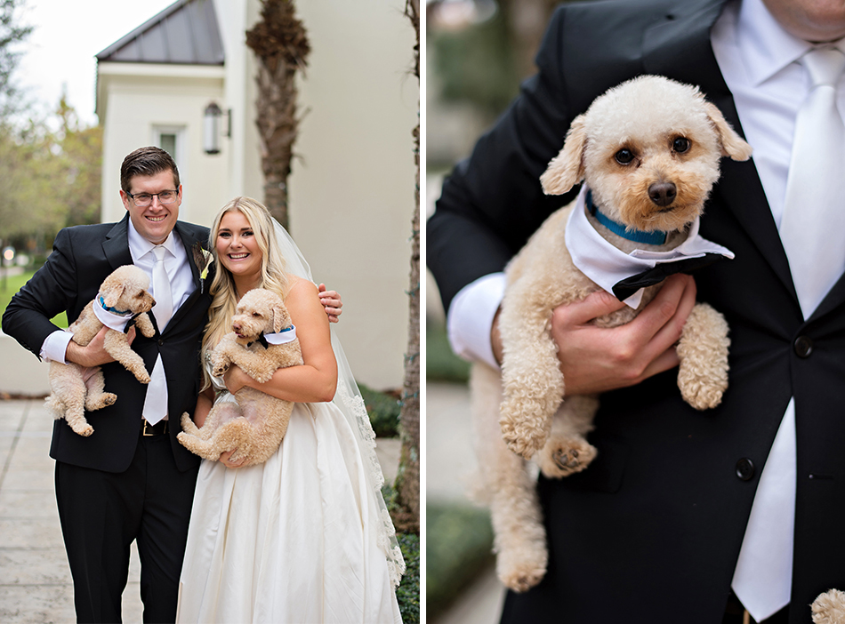 bride and groom dogs