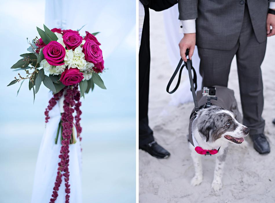 wedding ceremony dog