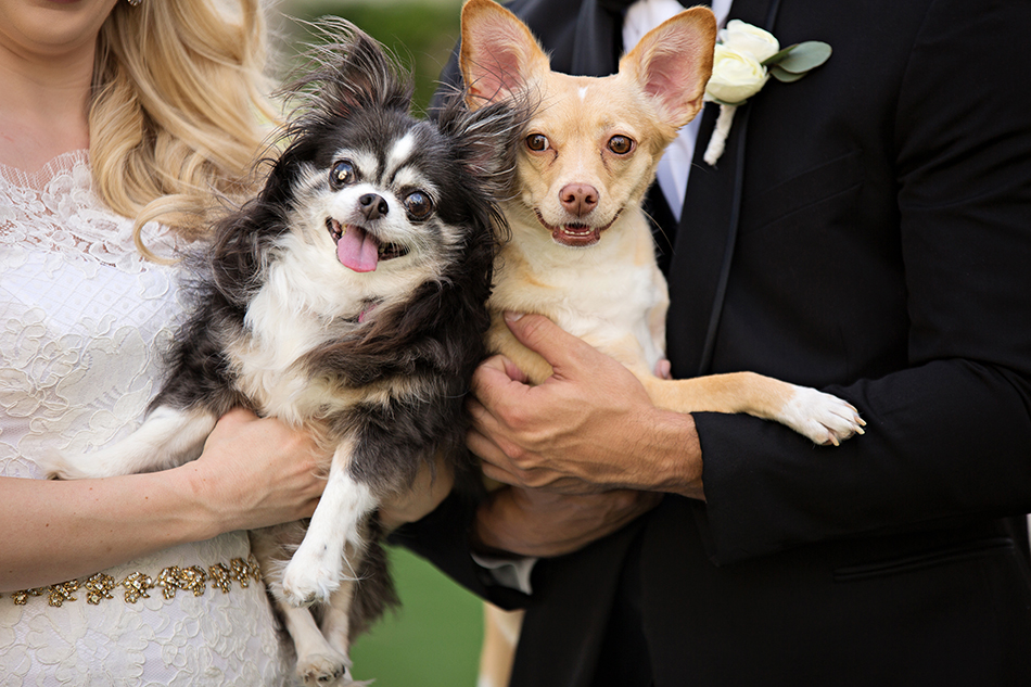 Dogs at wedding day with bride and groom