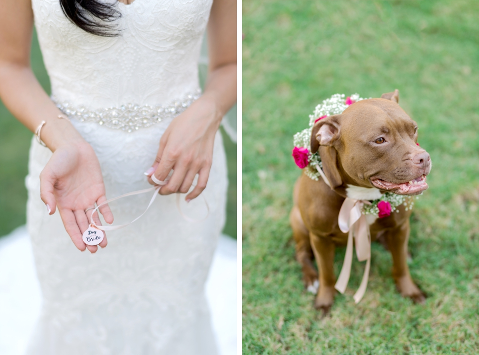 dog of the bride collar