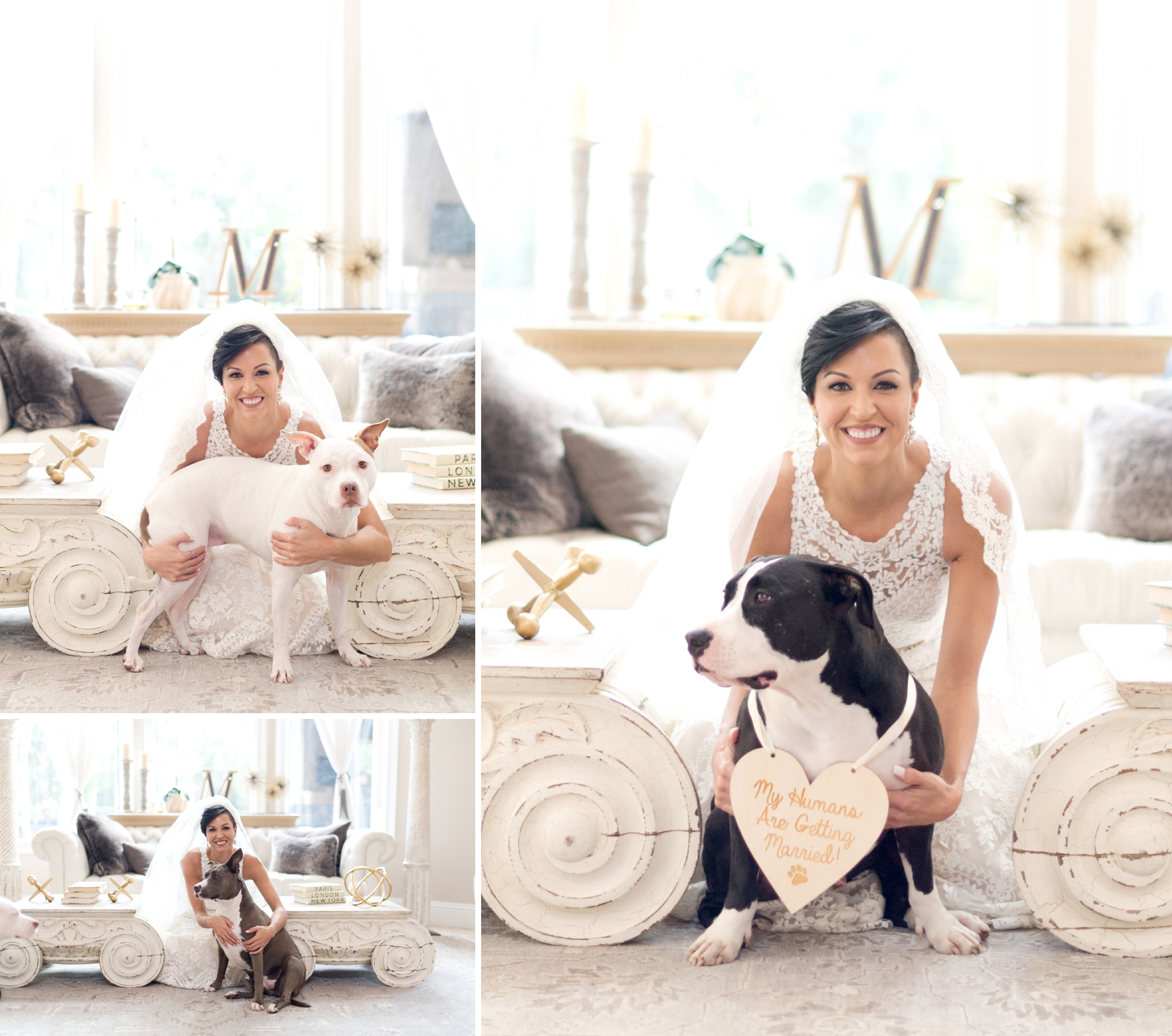 bride with pitbull dogs
