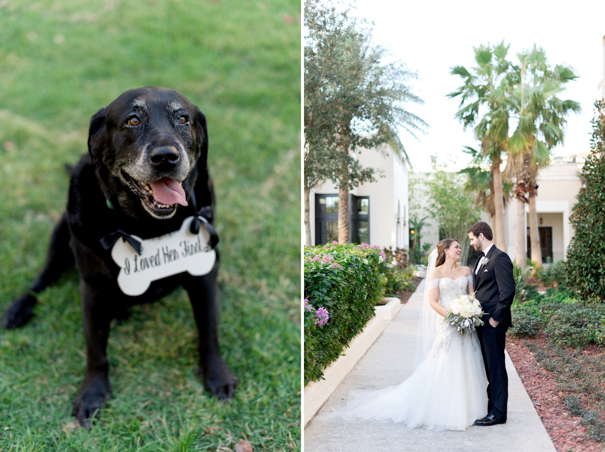 pet friendly wedding venues in orlando