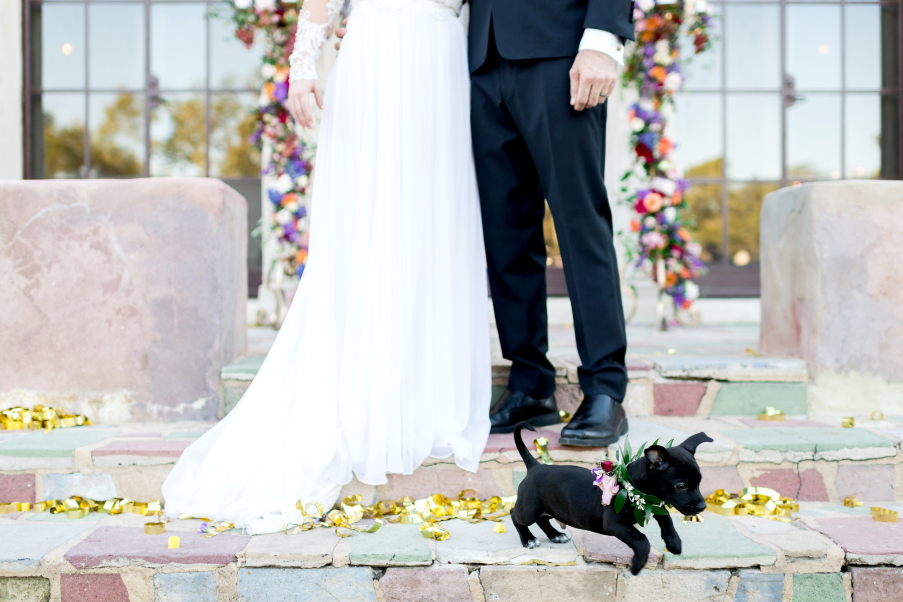puppy with flower collar at wedding