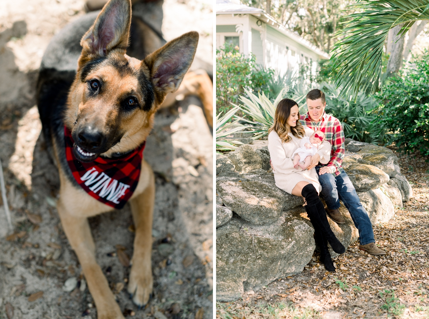 orlando dog portraits