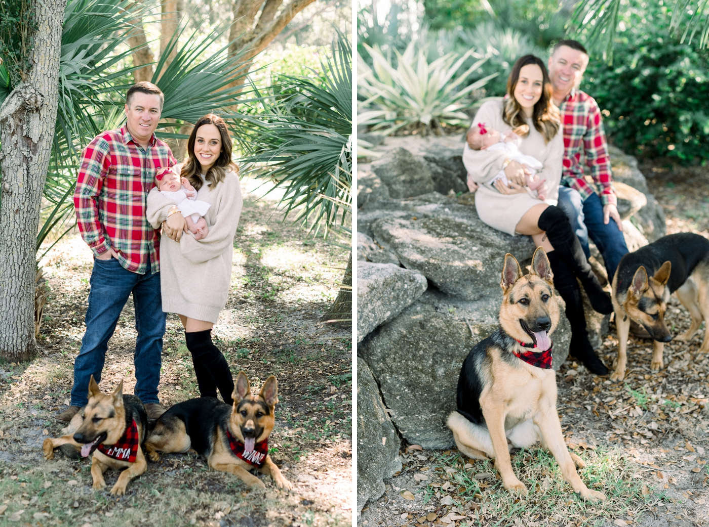 family session with dogs