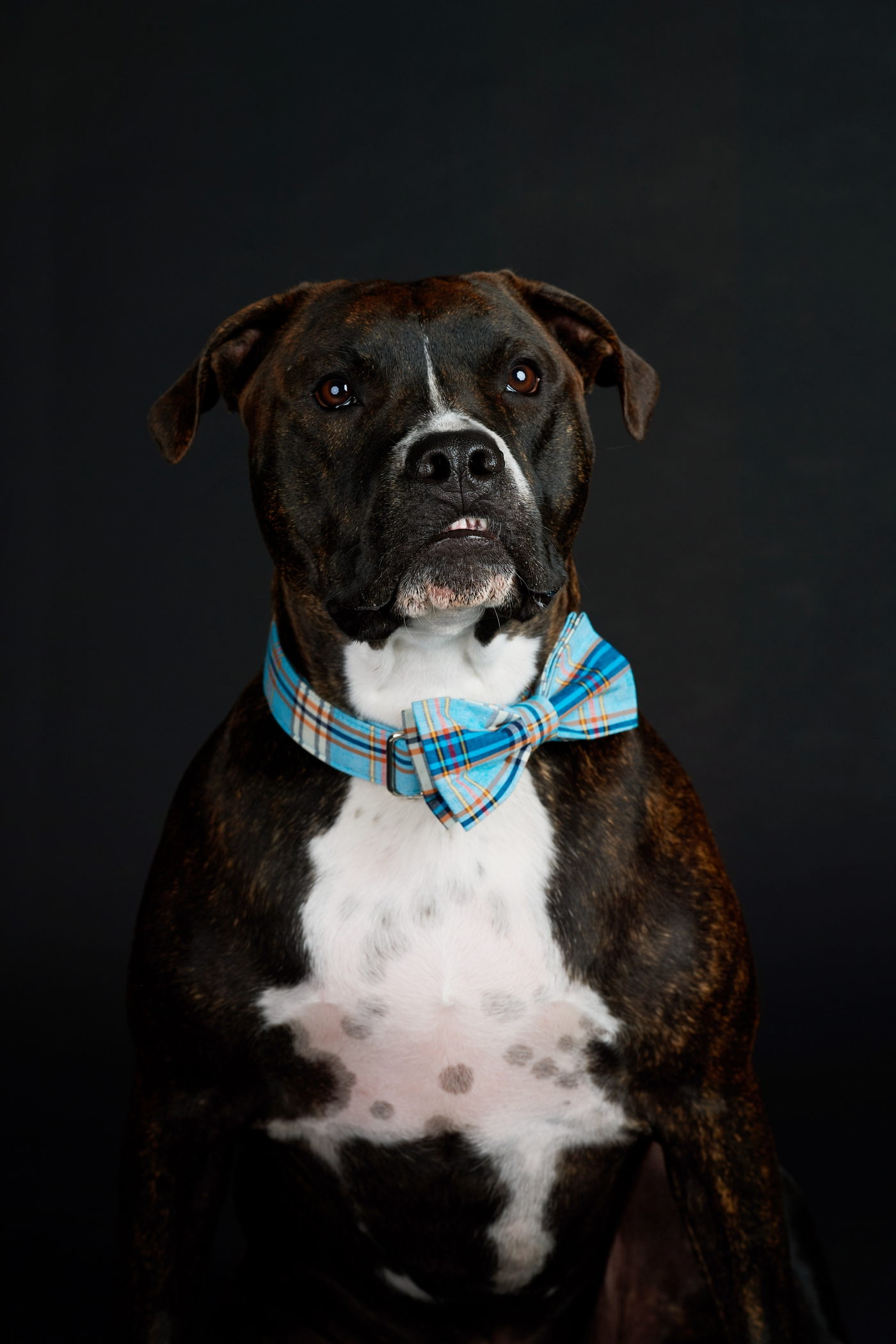 animal rescue portraits
