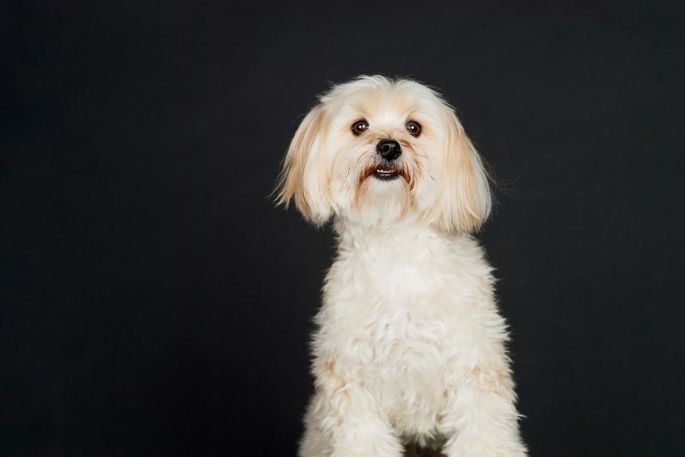 rescue pet photographers