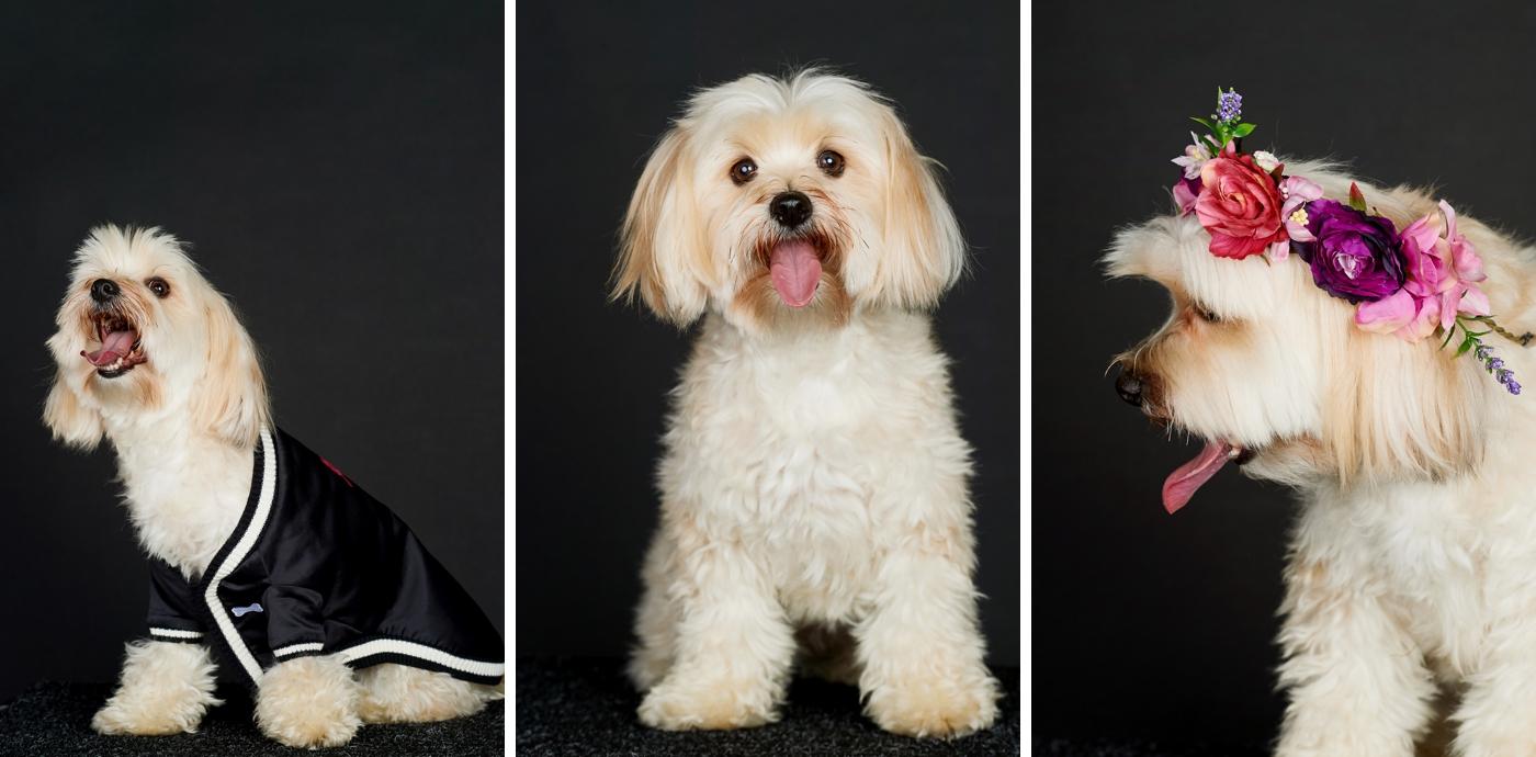foster pet photographer