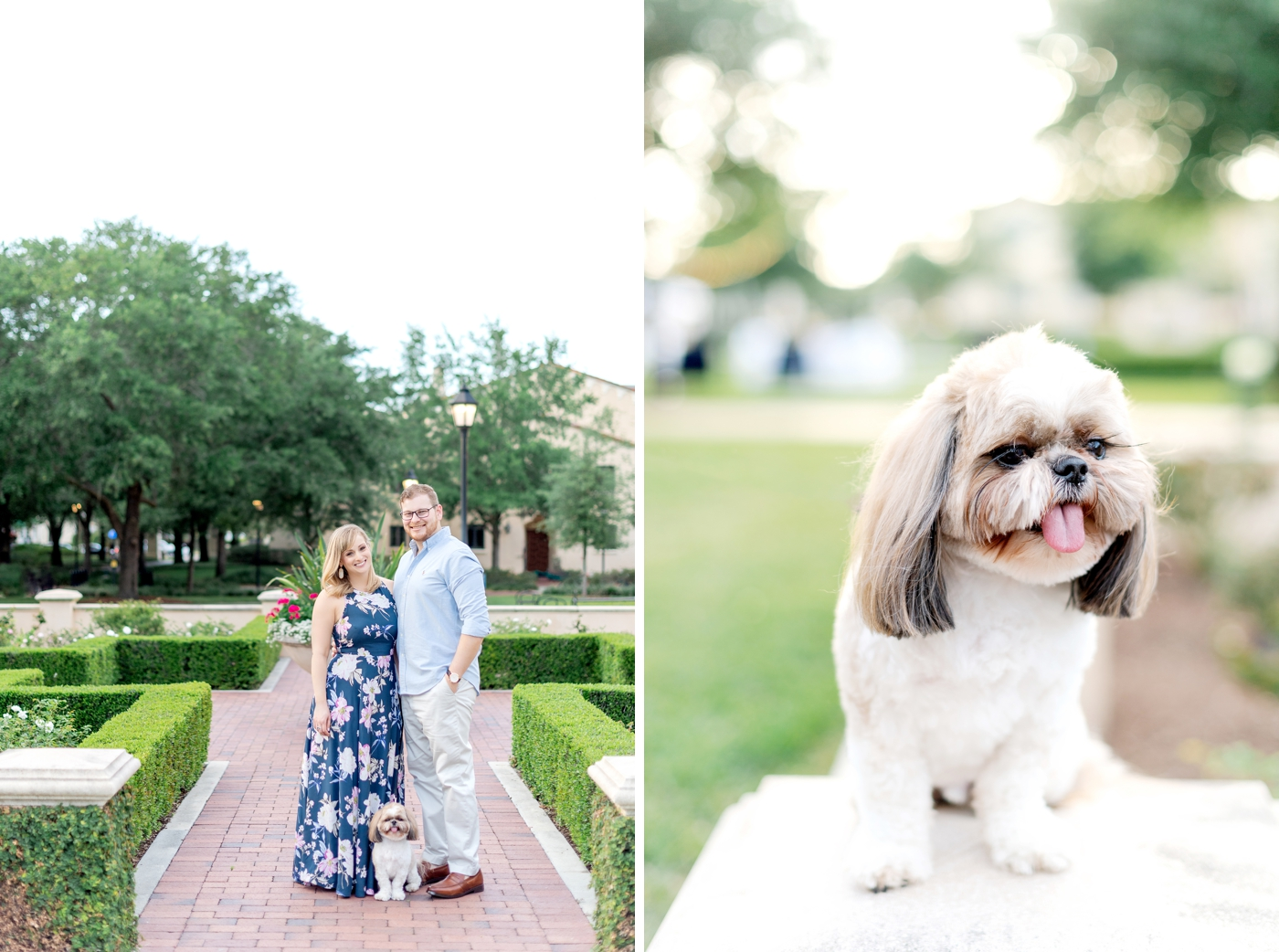 winter park dog photos