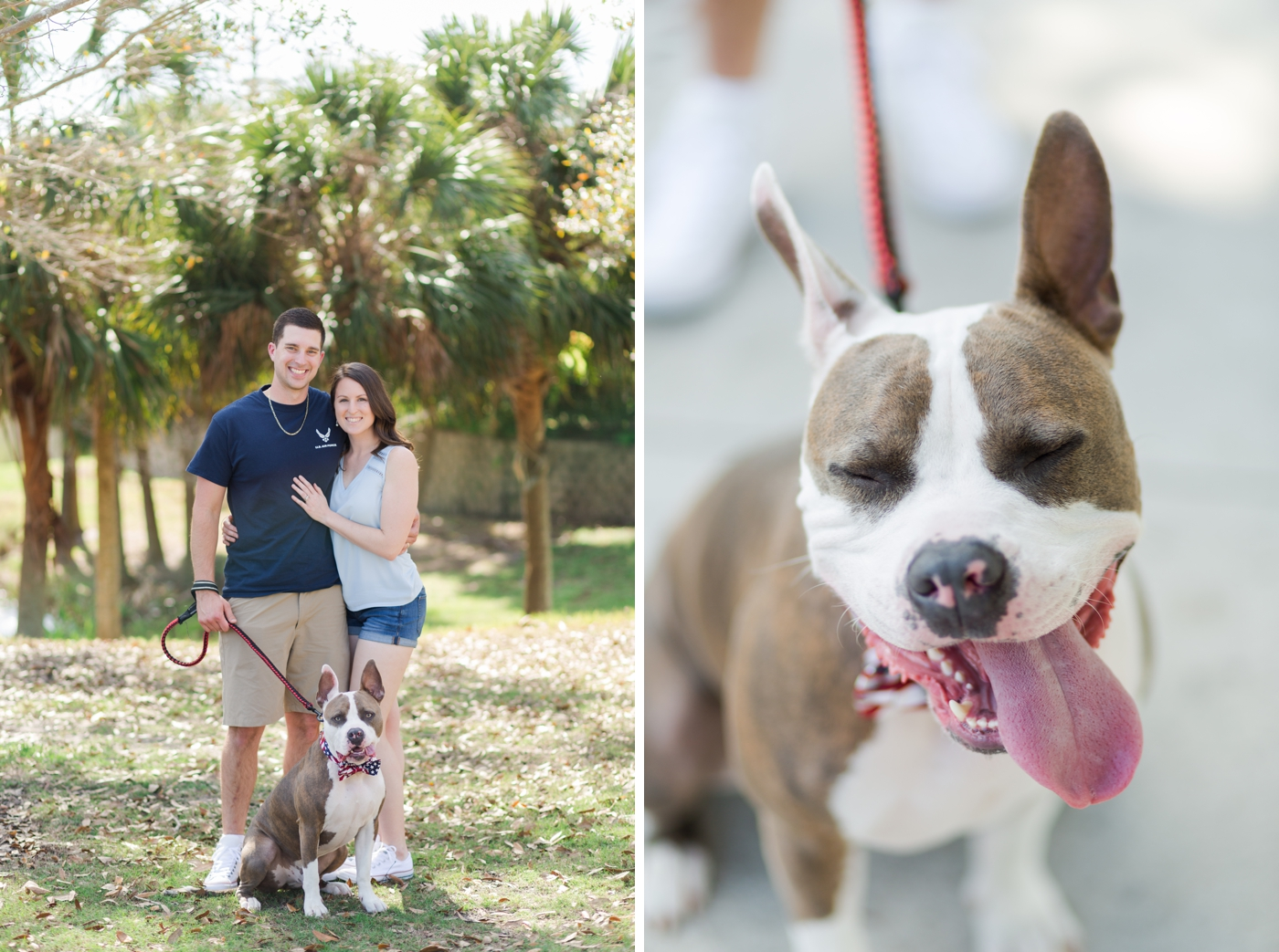 Pet Photography Fundraiser for Orlando Animal Rescue, The