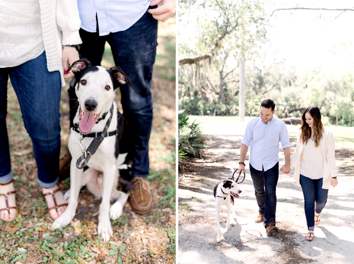 dog friendly family photos