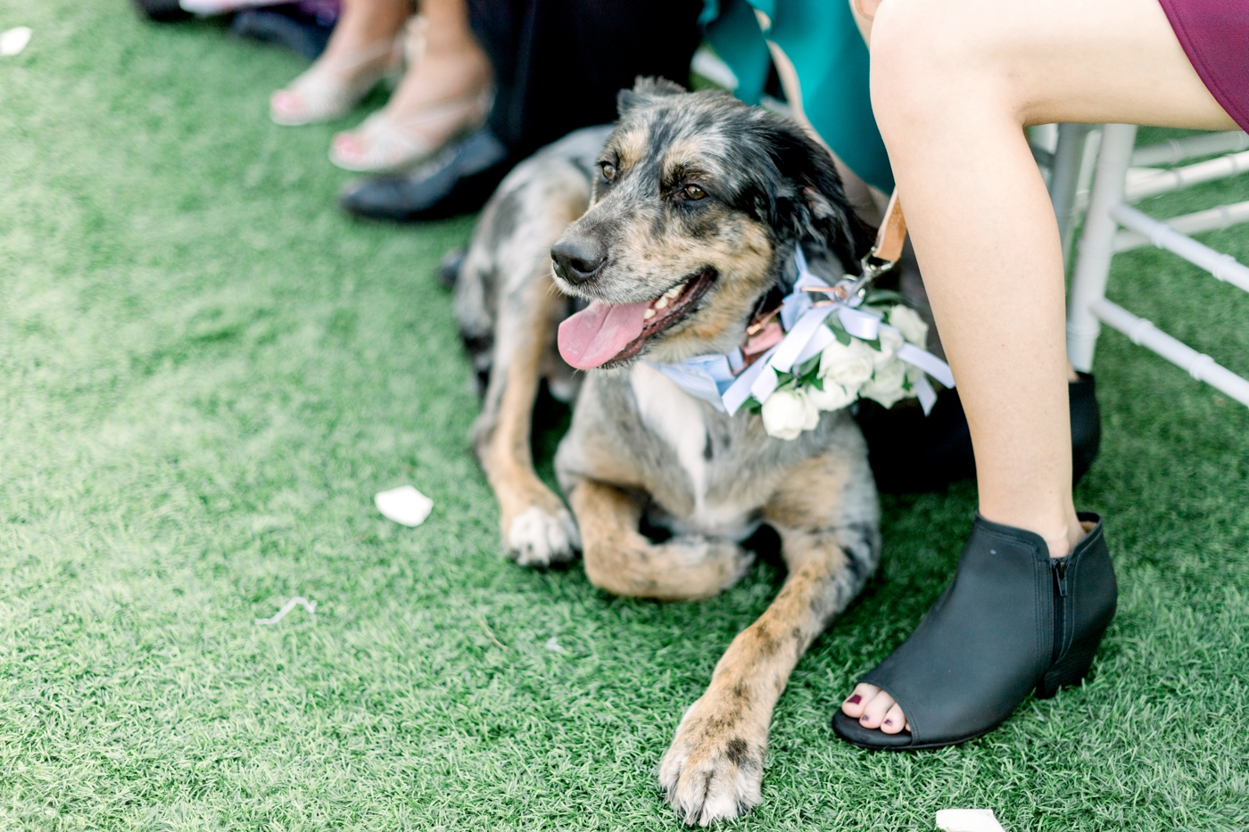 dog as ring bearer